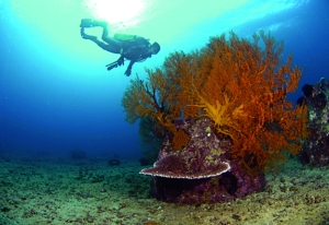 Photo courtesy of reefball.org.